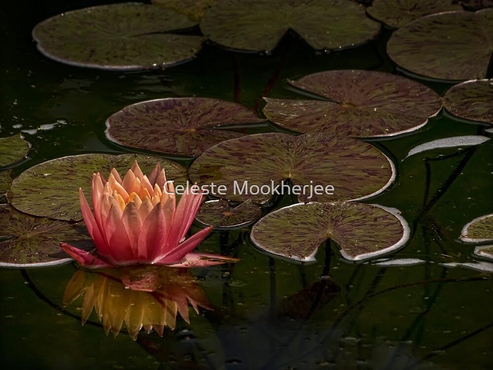 Water lily lights up dark pond by Celeste Mookherjee