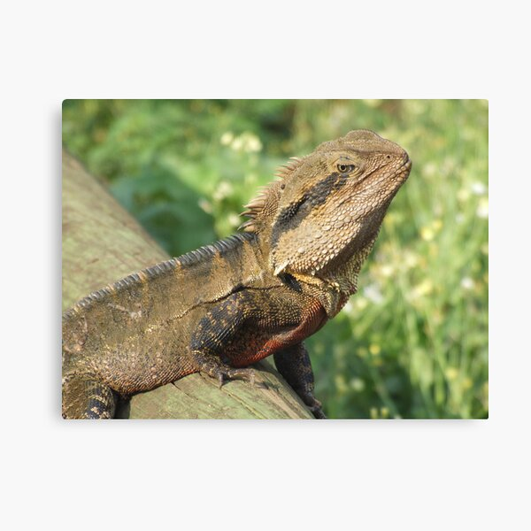 Water Dragon Canvas Print