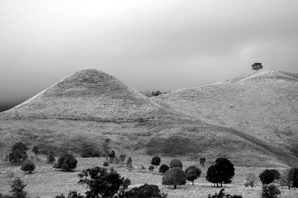 The Tree on the Hill by Trevor Farrell