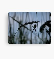 Wasp spiders come to the Island Canvas Print