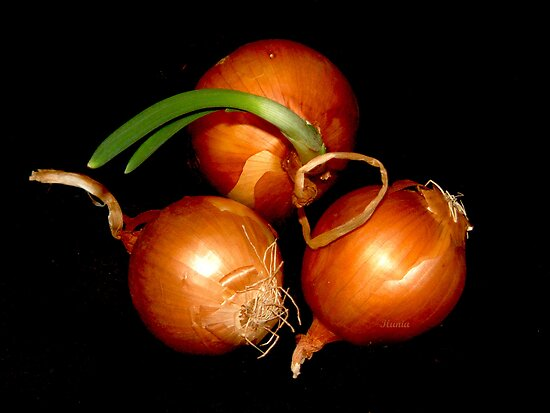 Onions by Ilunia Felczer