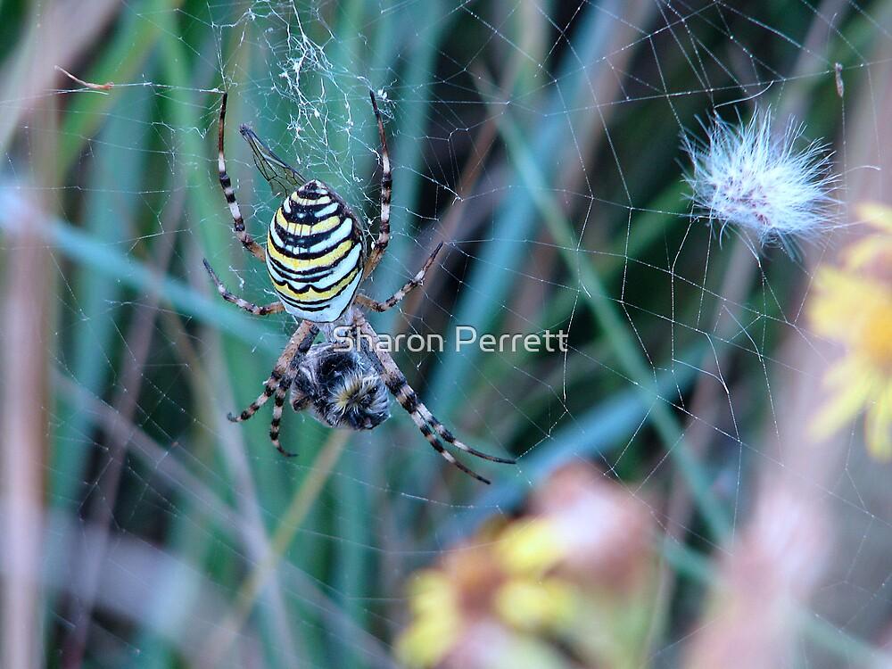 Wasp kills bee  by Sharon Perrett