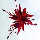 Red Splash by Paul Finnegan