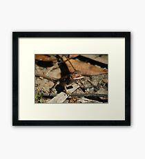 Mountain Dragon Framed Print