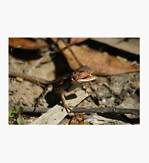 Mountain Dragon Photographic Print
