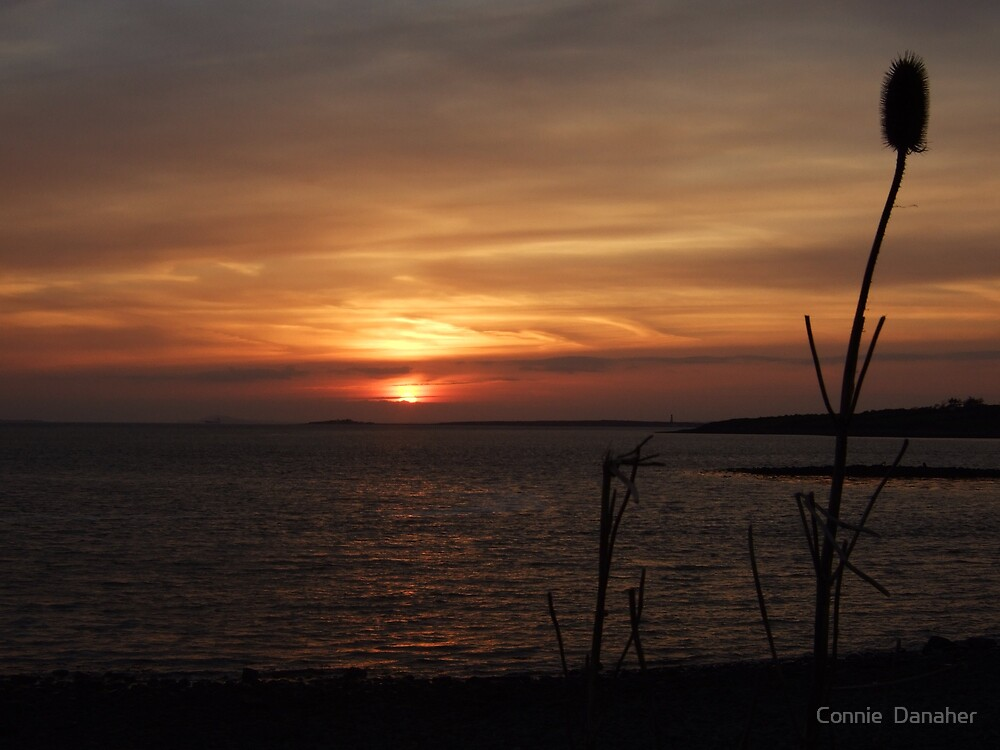 Sunset on the Shannon by Connie  Danaher