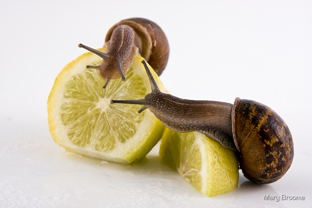 Escargot with Lemon by Mary Broome
