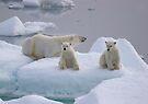 Polar Bear Family II by Steve Bulford