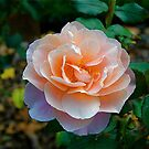 Inside the Rose by Jim Caldwell