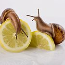 Lemon Snails by Samantha Cole-Surjan