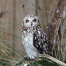 Posing Owl by Dorothy Thomson