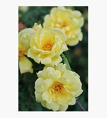 Spring Roses #1 Photographic Print
