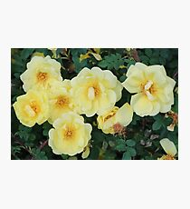Spring Roses #4 Photographic Print
