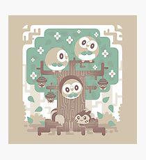 Wood Owl Woods Photographic Print