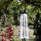 millaa millaa Falls, Australia by digitaldawn