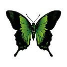 Green Butterfly   Vintage Butterfly   Green and Black   by EclecticAtHeART
