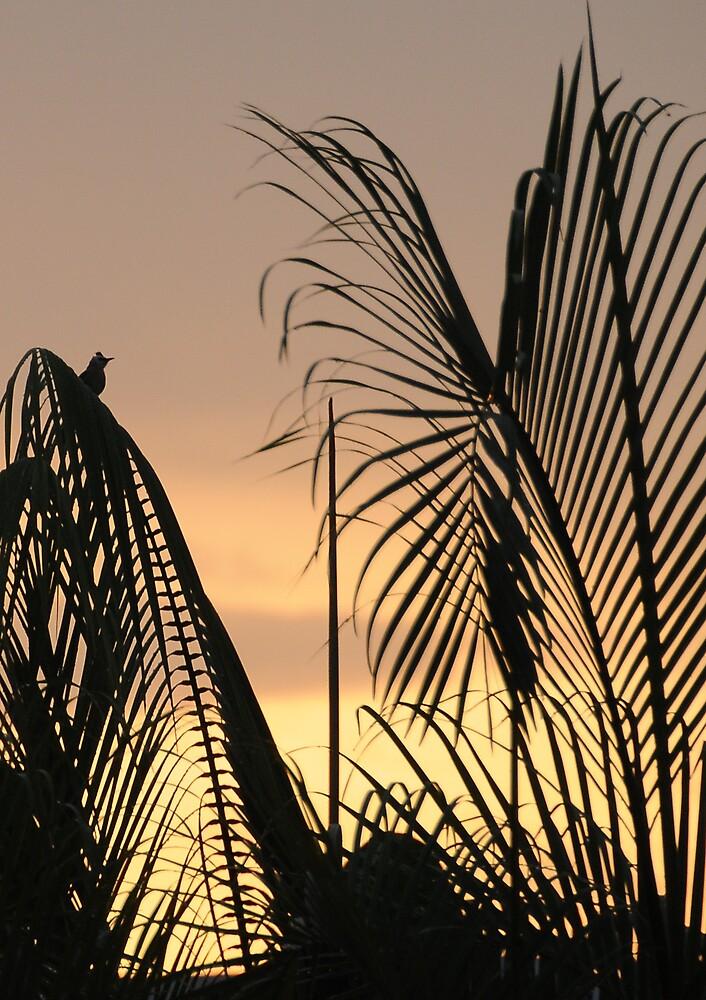 Sunset by PixCrazy