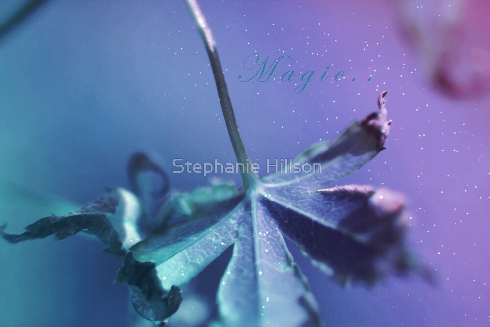 Magic by Stephanie Hillson