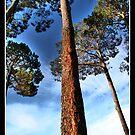 Trees by Stephen Joso