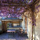 Under the wisteria by Peter Hammer