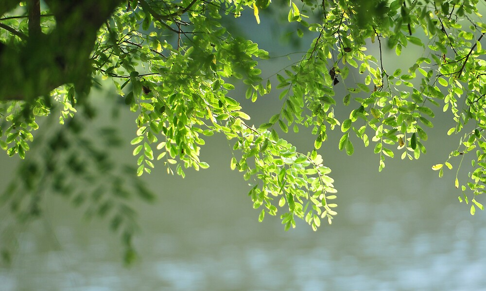 Hanging Leaves over the river by PixCrazy