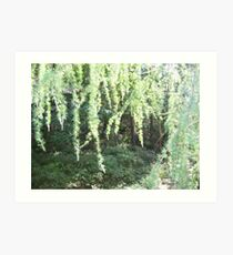 Enchanted Forest - Behind The Curtains Art Print
