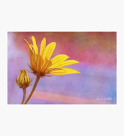 Painted Swamp Sunflower and Bud Along the Fence Photographic Print