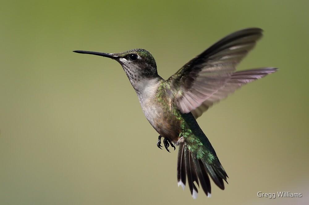 In Flight.... by Gregg Williams