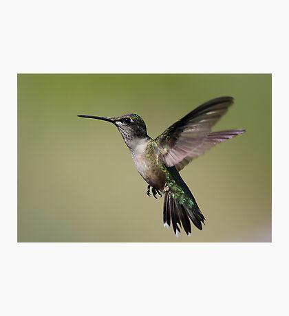 In Flight.... Photographic Print