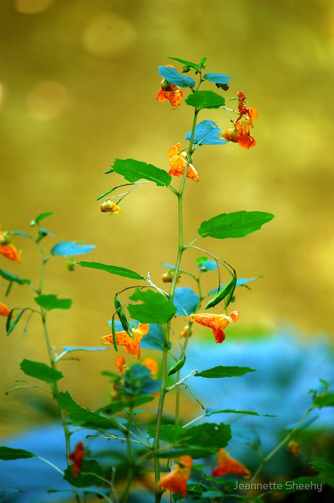Pond Flower (or Jewelweed) by Jeannette Sheehy