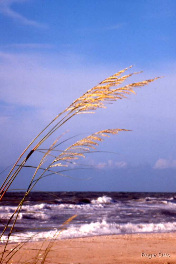 Sea Oats by Roger Otto
