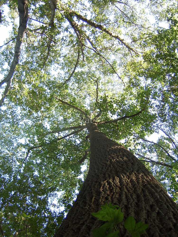 Tall Tall Tree by kat  -