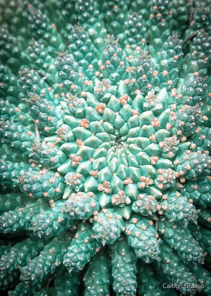 Blühende Geometrie von Caitlyn Grasso