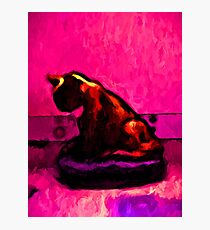 Cat and a Hot Pink Wall Photographic Print