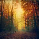 Autumn Morning Walk by Dirk Wuestenhagen
