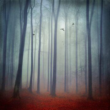 Foggy Forest by DyrkWyst
