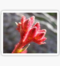 Australian Native Kangaroo Paw 'Anigozanthus', showing fine hairs. Sticker