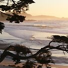 Carmel Peachy Sunset Framed by Branches by Sandra Gray