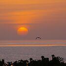 Sanibel Sunrise by Karen Checca