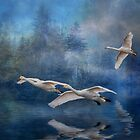 Winter Swans by Brian Tarr