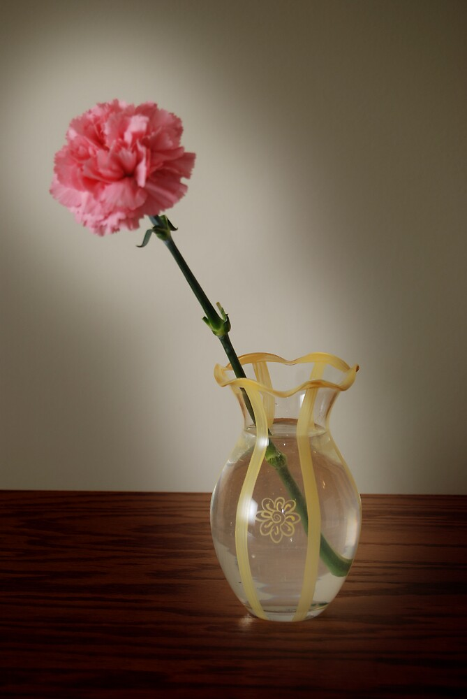 Pink Carnation by G. David Chafin