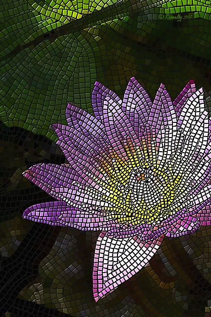 Water Lily by Kinnally