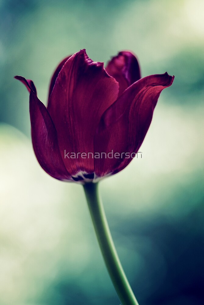 Kind words can be short and easy to speak but their echoes are truly endless  by karenanderson