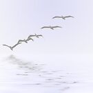 Pelicans Foggy Flight by Kimberly Palmer