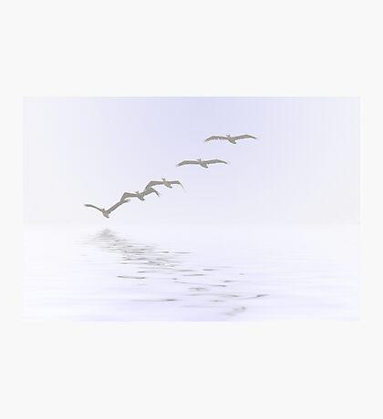 Pelicans Foggy Flight Photographic Print