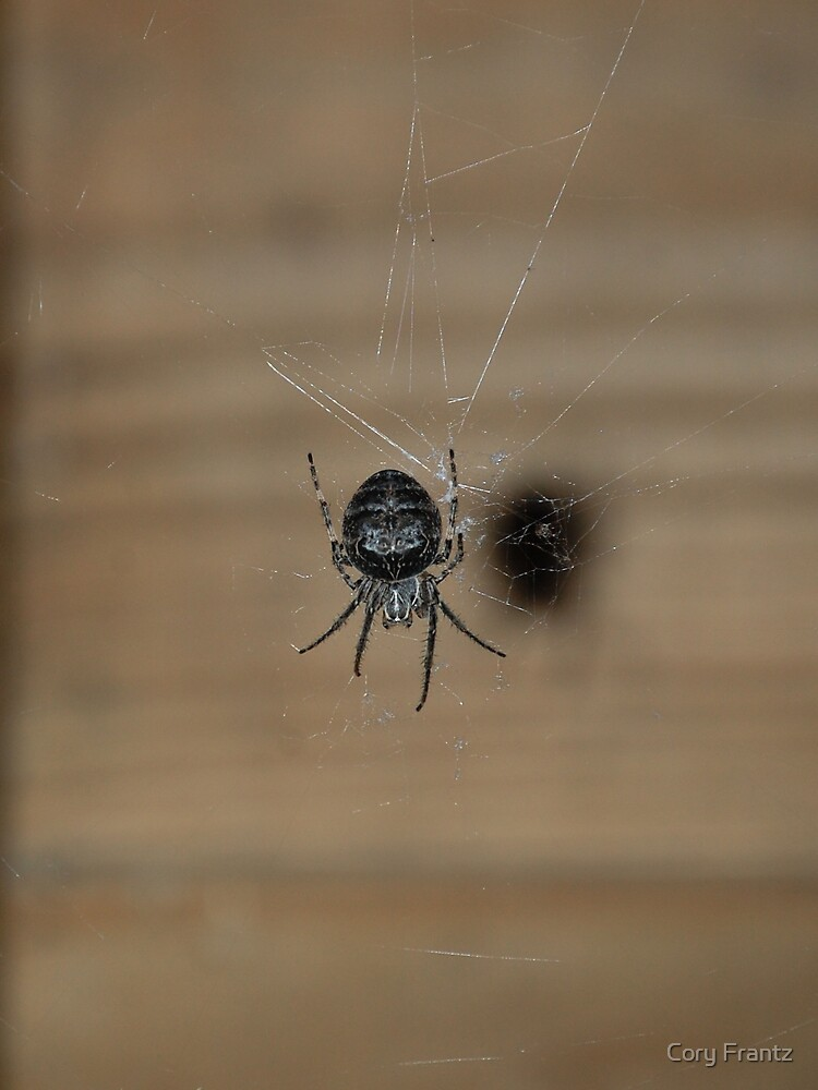 House Spider by Cory Frantz