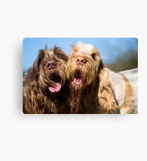 Italian Spinoni Dogs Woody and Ruben Canvas Print