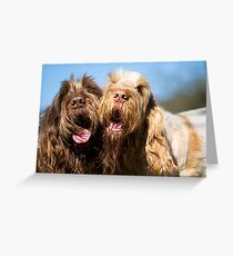Italian Spinoni Dogs Woody and Ruben Greeting Card