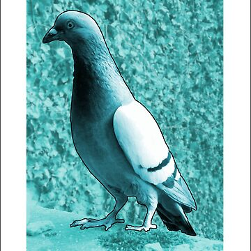 The Pigeon by GeorgeSears