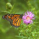 Monarch by Lisa Putman